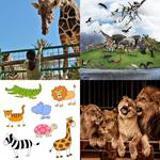 3-buchstaben-lösung-zoo