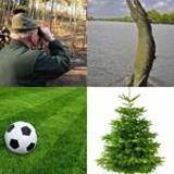 4-buchstaben-lösung-grün