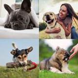4-buchstaben-lösung-hund