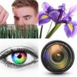 4-buchstaben-lösung-iris