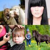 4-buchstaben-lösung-pony