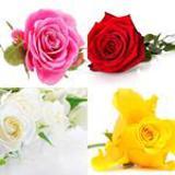 4-buchstaben-lösung-rose