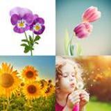 5 Buchstaben Lösung Blume