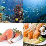5 Buchstaben Lösung Fisch