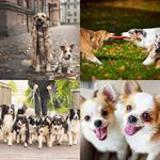 5 Buchstaben Lösung Hunde