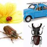 5 Buchstaben Lösung Käfer