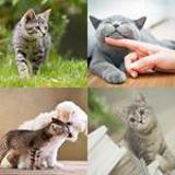 5 Buchstaben Lösung Katze