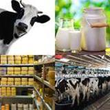 5 Buchstaben Lösung Milch