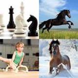 5 Buchstaben Lösung Pferd