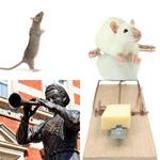 5 Buchstaben Lösung Ratte