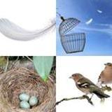 5 Buchstaben Lösung Vogel