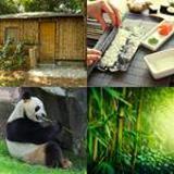 6 Buchstaben Lösung Bambus