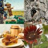 6 Buchstaben Lösung Bienen