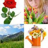6 Buchstaben Lösung Blumen