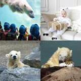6 Buchstaben Lösung Eisbär