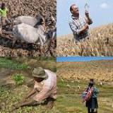 6 Buchstaben Lösung Farmer