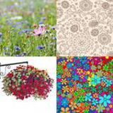 6 Buchstaben Lösung Floral