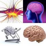 6 Buchstaben Lösung Gehirn