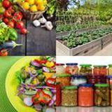 6 Buchstaben Lösung Gemüse