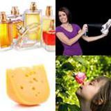 6 Buchstaben Lösung Geruch