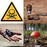 6 Buchstaben Lösung Giftig