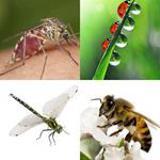 6 Buchstaben Lösung Insekt