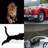 6 Buchstaben Lösung Jaguar