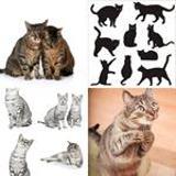 6 Buchstaben Lösung Katzen
