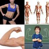 6 Buchstaben Lösung Muskel