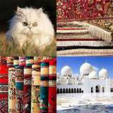 6 Buchstaben Lösung Perser