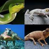 6 Buchstaben Lösung Reptil