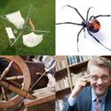 6 Buchstaben Lösung Spinne