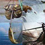 7 Buchstaben Lösung Fischen
