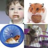 7 Buchstaben Lösung Hamster
