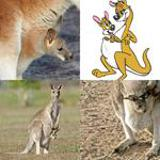 7 Buchstaben Lösung Känguru