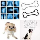 7 Buchstaben Lösung Knochen