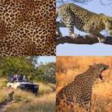 7 Buchstaben Lösung Leopard