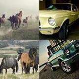 7 Buchstaben Lösung Mustang