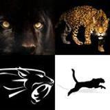 7 Buchstaben Lösung Panther