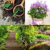 7 Buchstaben Lösung Pflanze