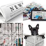 7 Buchstaben Lösung Zeitung
