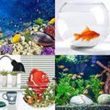 8 Buchstaben Lösung Aquarium