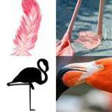 8 Buchstaben Lösung Flamingo