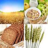 8 Buchstaben Lösung Getreide