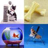 8 Buchstaben Lösung Haustier
