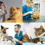 8 Buchstaben Lösung Tierarzt