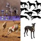 8 Buchstaben Lösung Windhund