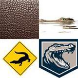 9 Buchstaben Lösung Alligator
