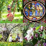 9 Buchstaben Lösung Apfelbaum