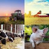9 Buchstaben Lösung Bauernhof